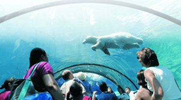OUR FAVORITE PLACES TO SEE ANIMALS