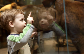 Top Family Friendly Museums In Detroit