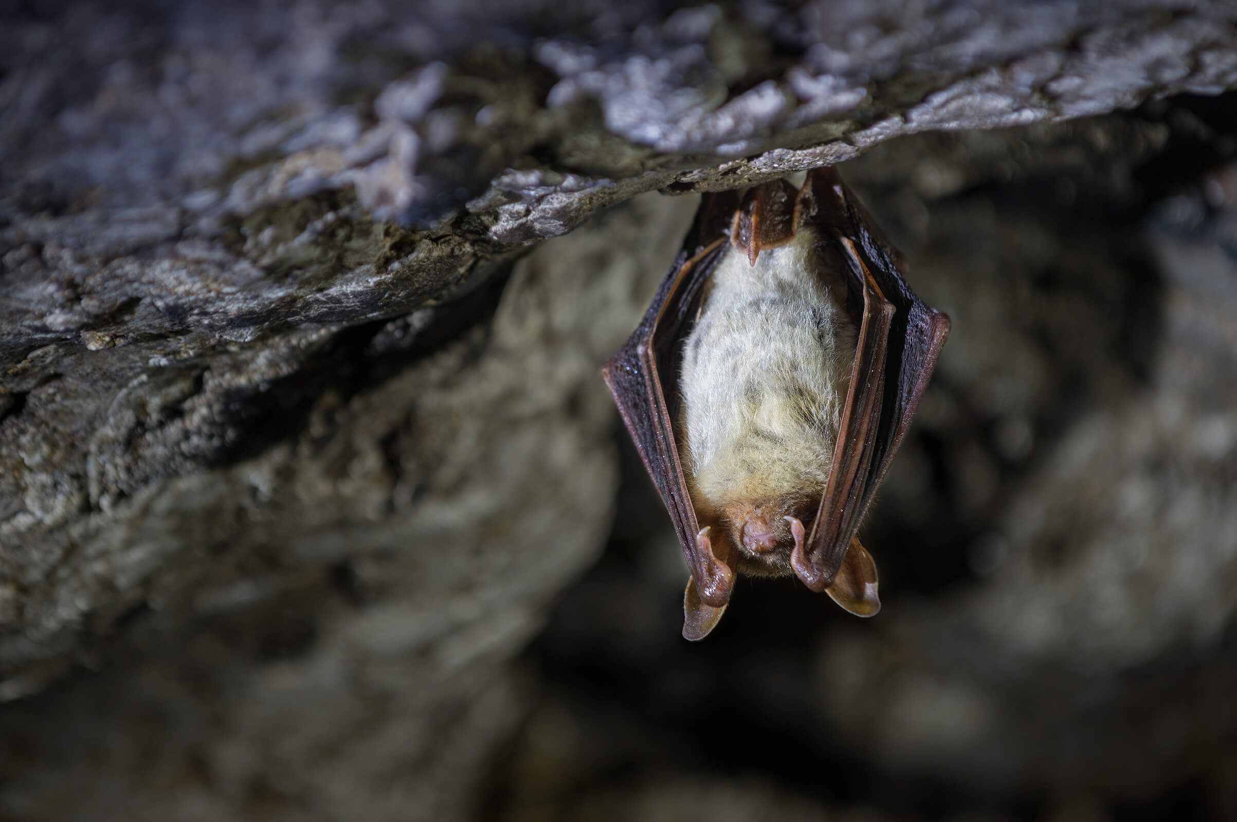 Bat Walks For Ages 5 – Adult