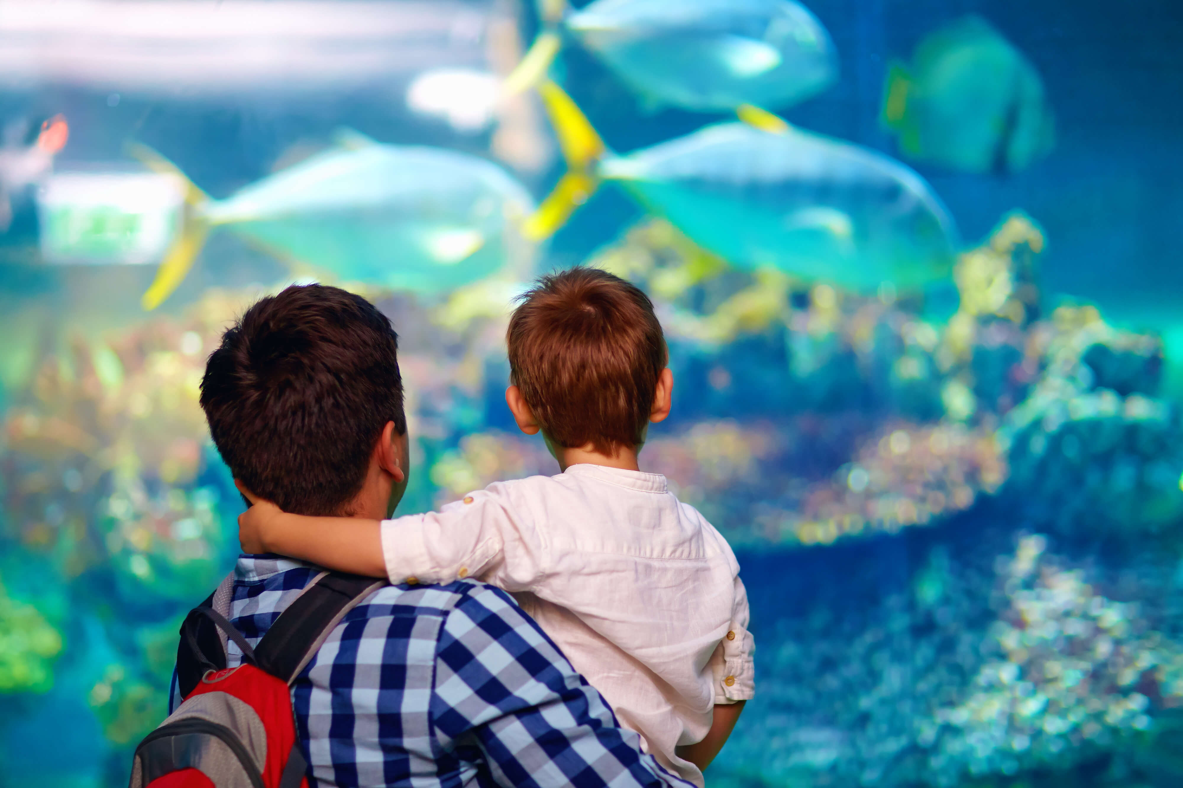 Father And Son In Oceanarium