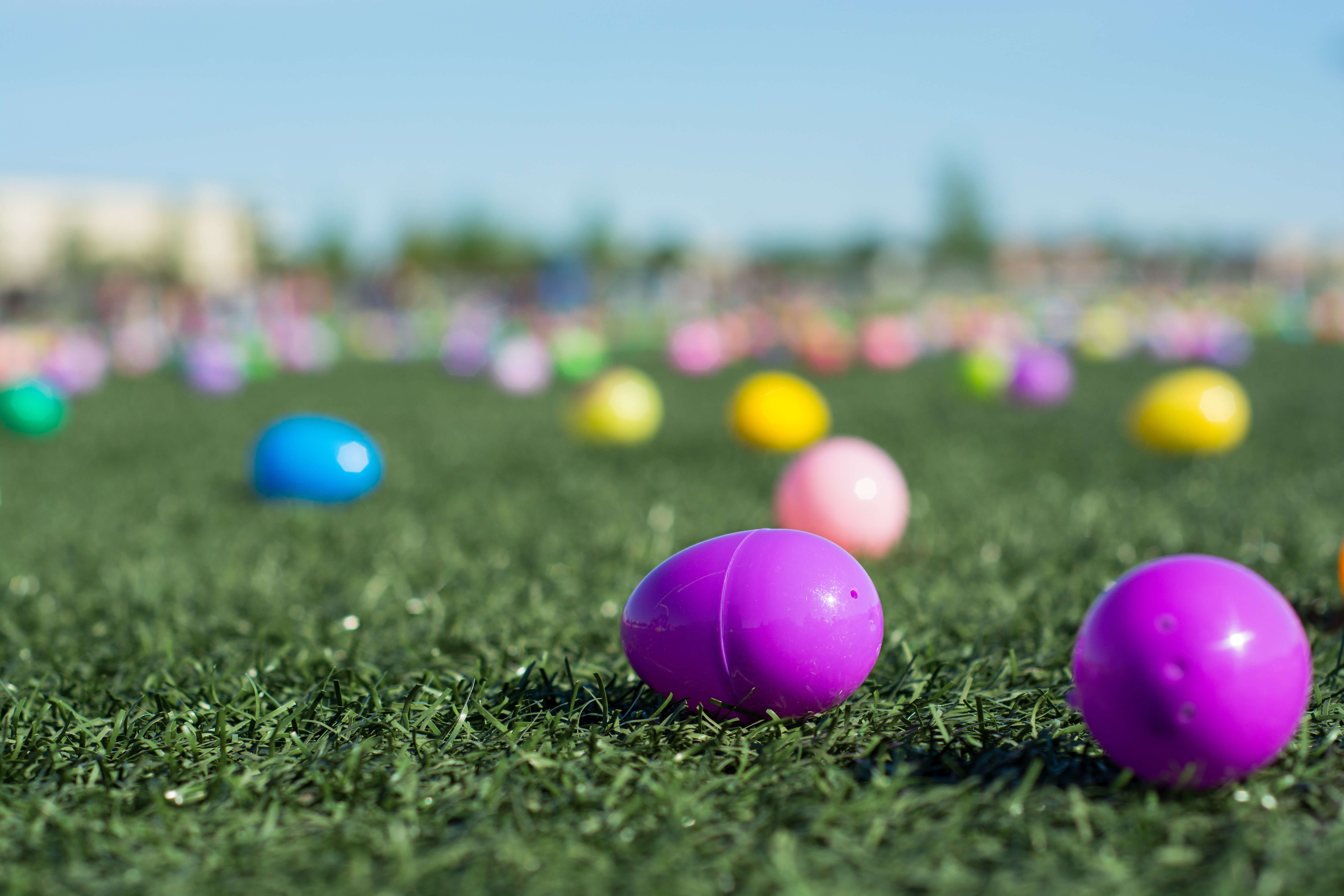 Easter egg hunt with plastic  colored eggs