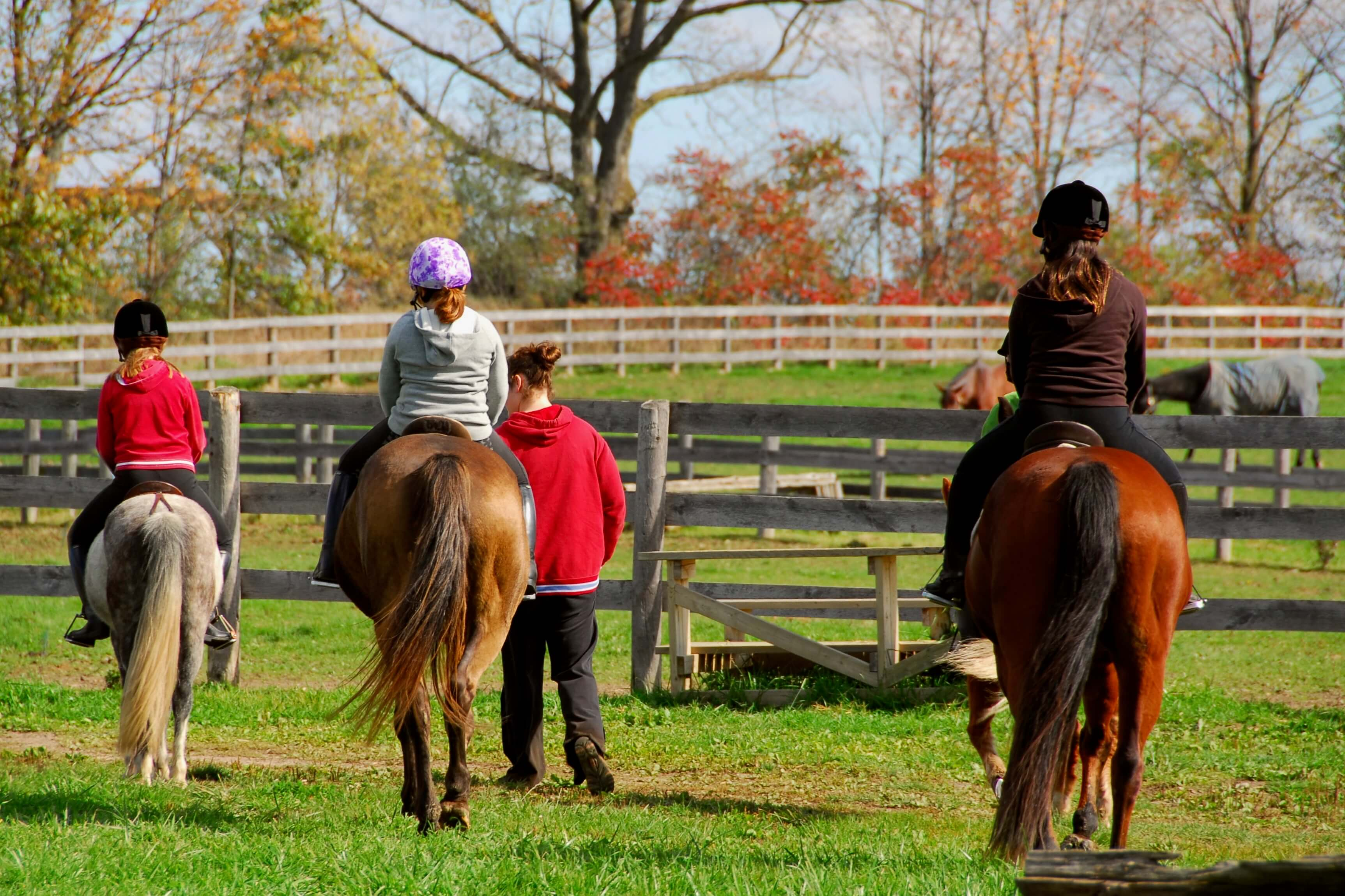 Children riding ponies and horses in a countryside