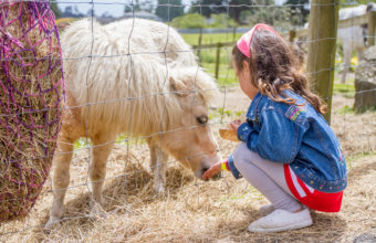 TOP 10 THINGS TO DO WITH KIDS THIS WEEK
