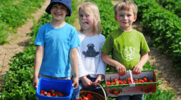 OUR FAVORITE U-PICK ORCHARDS IN METRO DETROIT