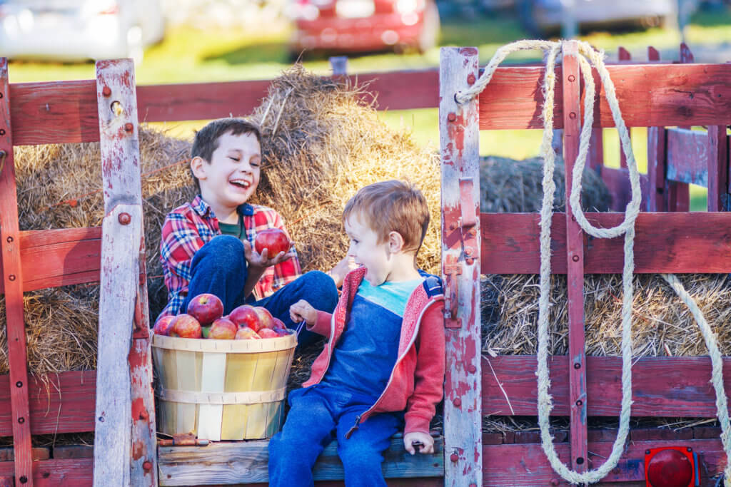 children having fun on the farm. happy boys sit on a cart with hay and keep a basket with apples