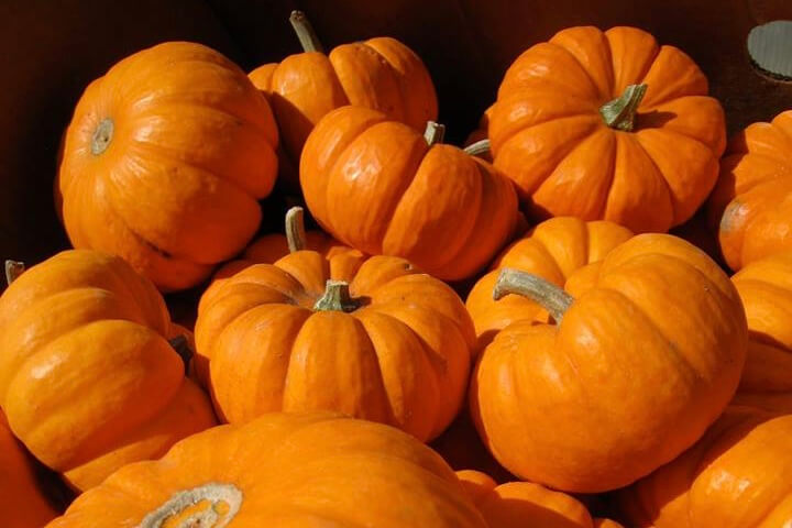 Four Feet Down The Trail (PreK) – My Little Pumpkins