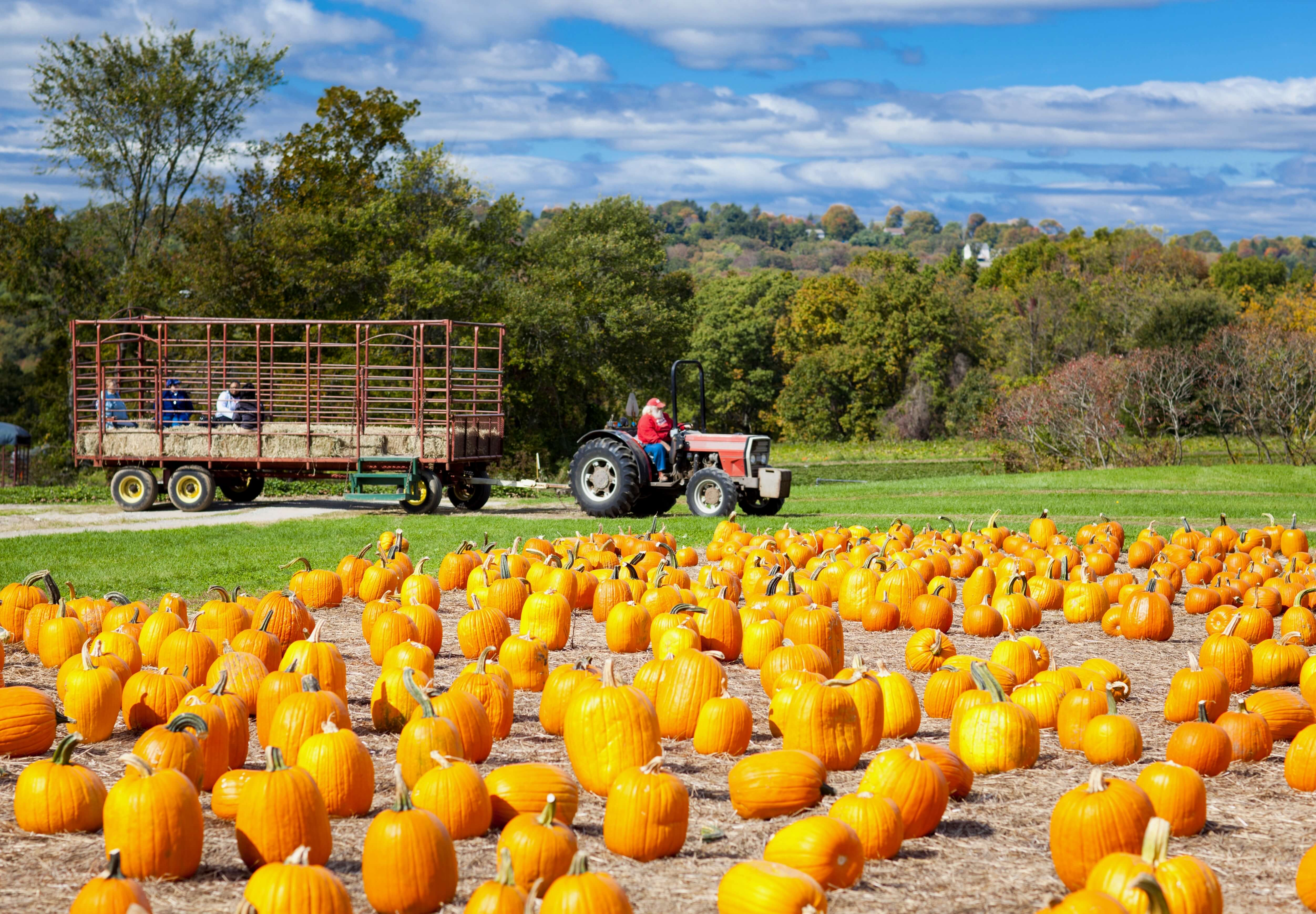 Wagon Tours & Hayrides In Metro Detroit