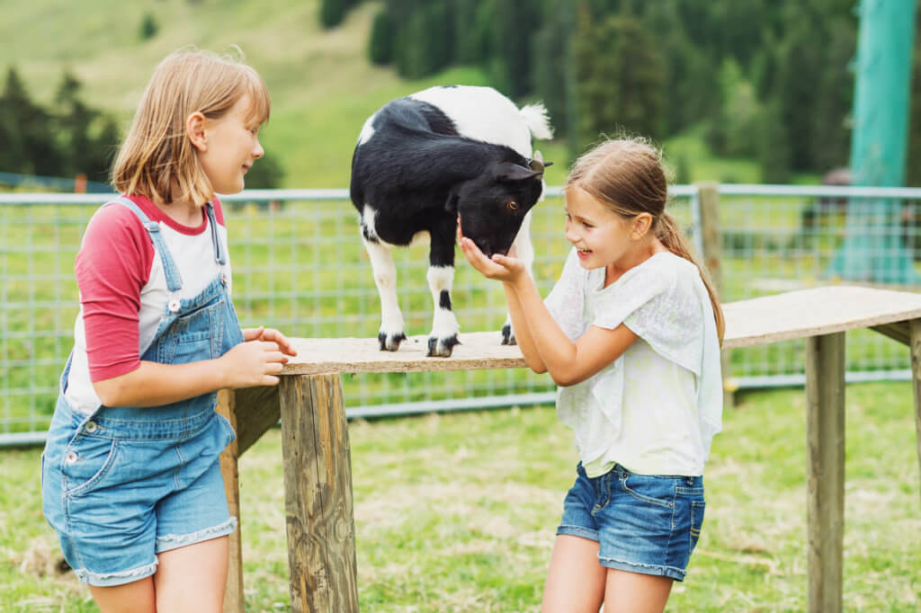 Little kid girls playing with goats during summer vacation in farmland