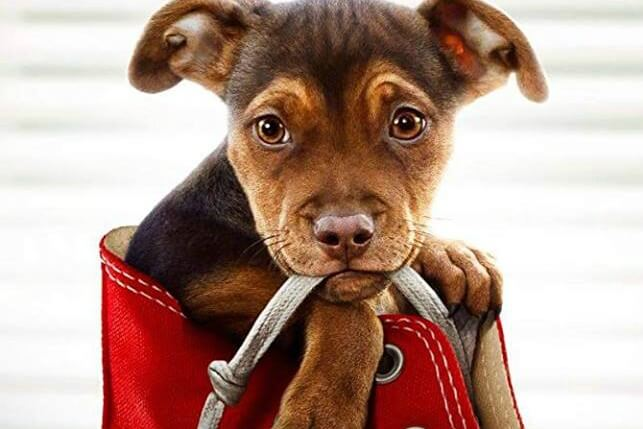 Movie In The Park: A Dog's Way Home