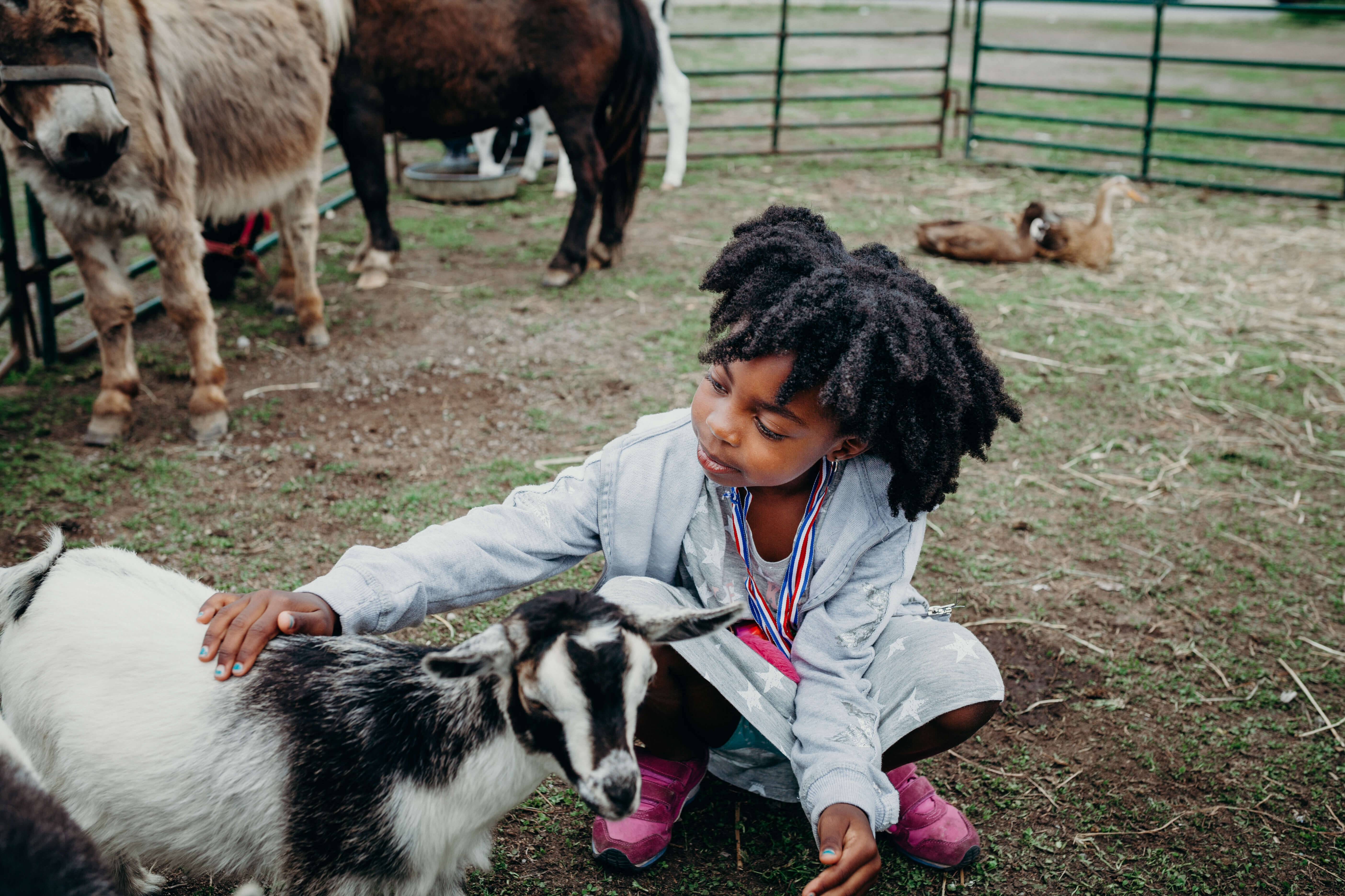 Petting zoo in the Kids Zone