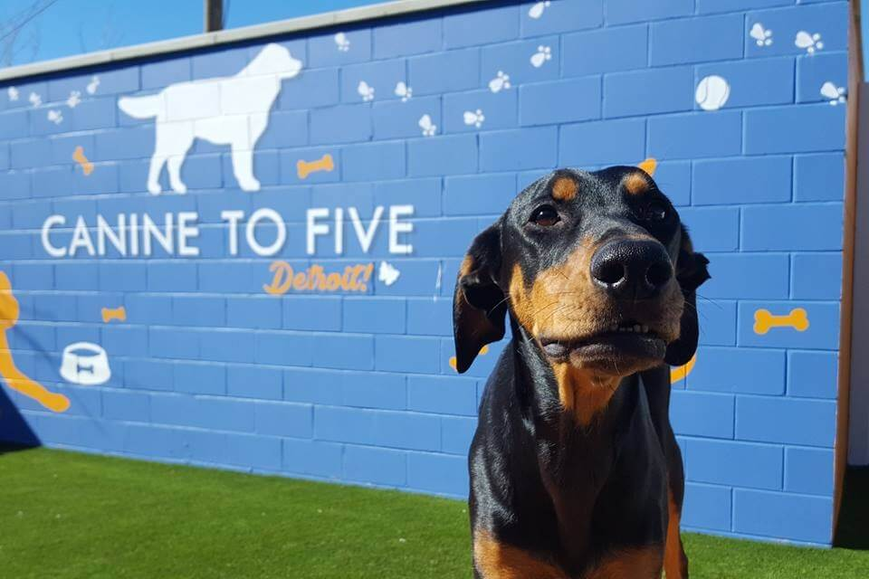 https://www.facebook.com/caninetofivedetroit/photos/a.10157200457234521/10157200457339521/?type=3&theater