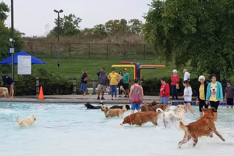Doggie Splash