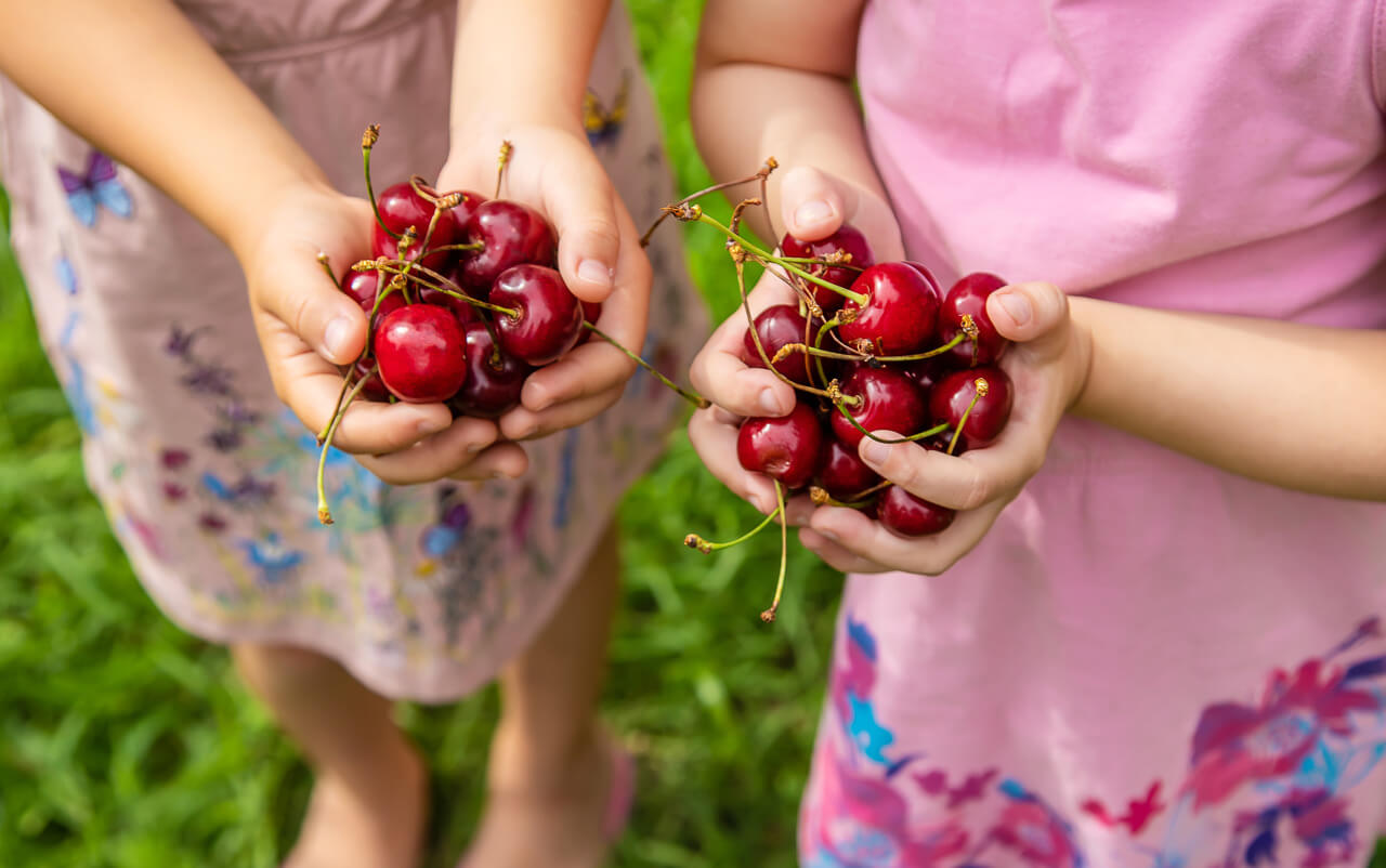 Children Eat Cherries In The Summer. Selective Focus. Nature.