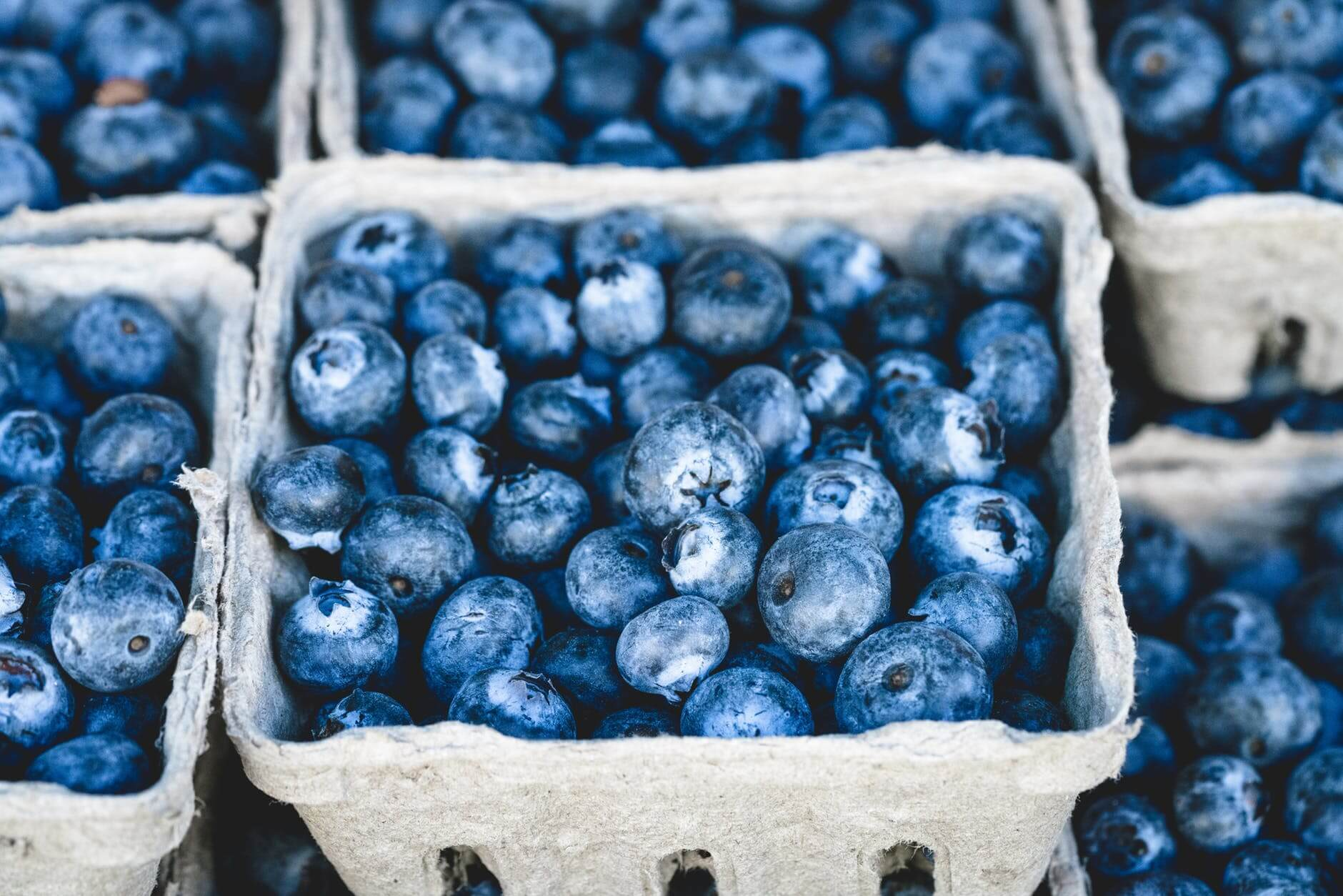 Dexter Blueberry Farm Opening Day