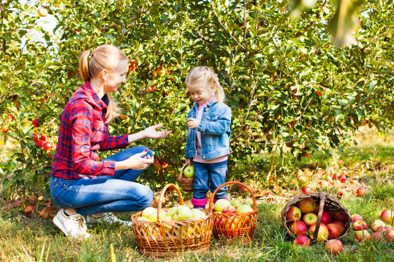 Young woman and a cute small girl at the apple orchard with green trees and grass on a background