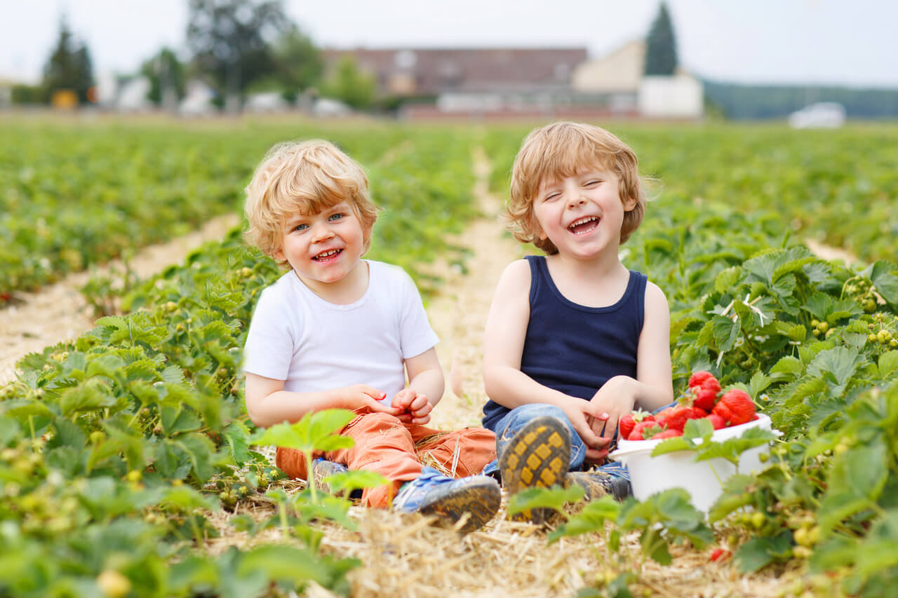 Two Little Sibling Boys Having Fun On Strawberry Farm In Summer