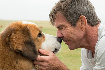 Movies In The Parks: A Dog's Purpose