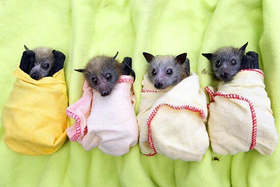 Little Critters Nature Hour: Going Batty!