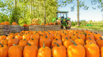 Best Places To Pick A Pumpkin In Metro Detroit