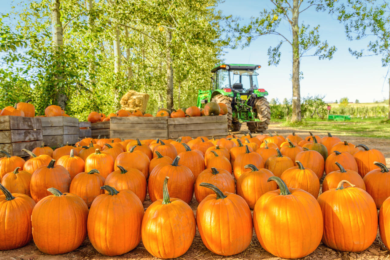 10 Places To Pick A Pumpkin In Metro Detroit