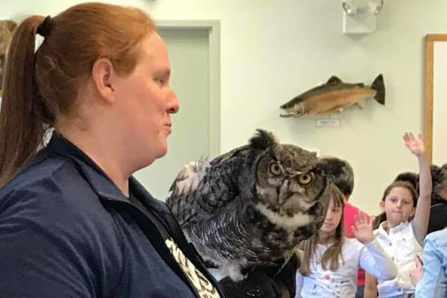 Live Owl Tours For Ages 3 – Adult