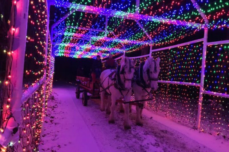 Trail Of Lights 2020 Horse Drawn Carriage Rides