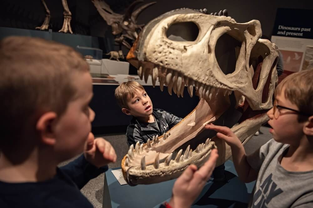 Know Before You Go: U-M Museum of Natural History