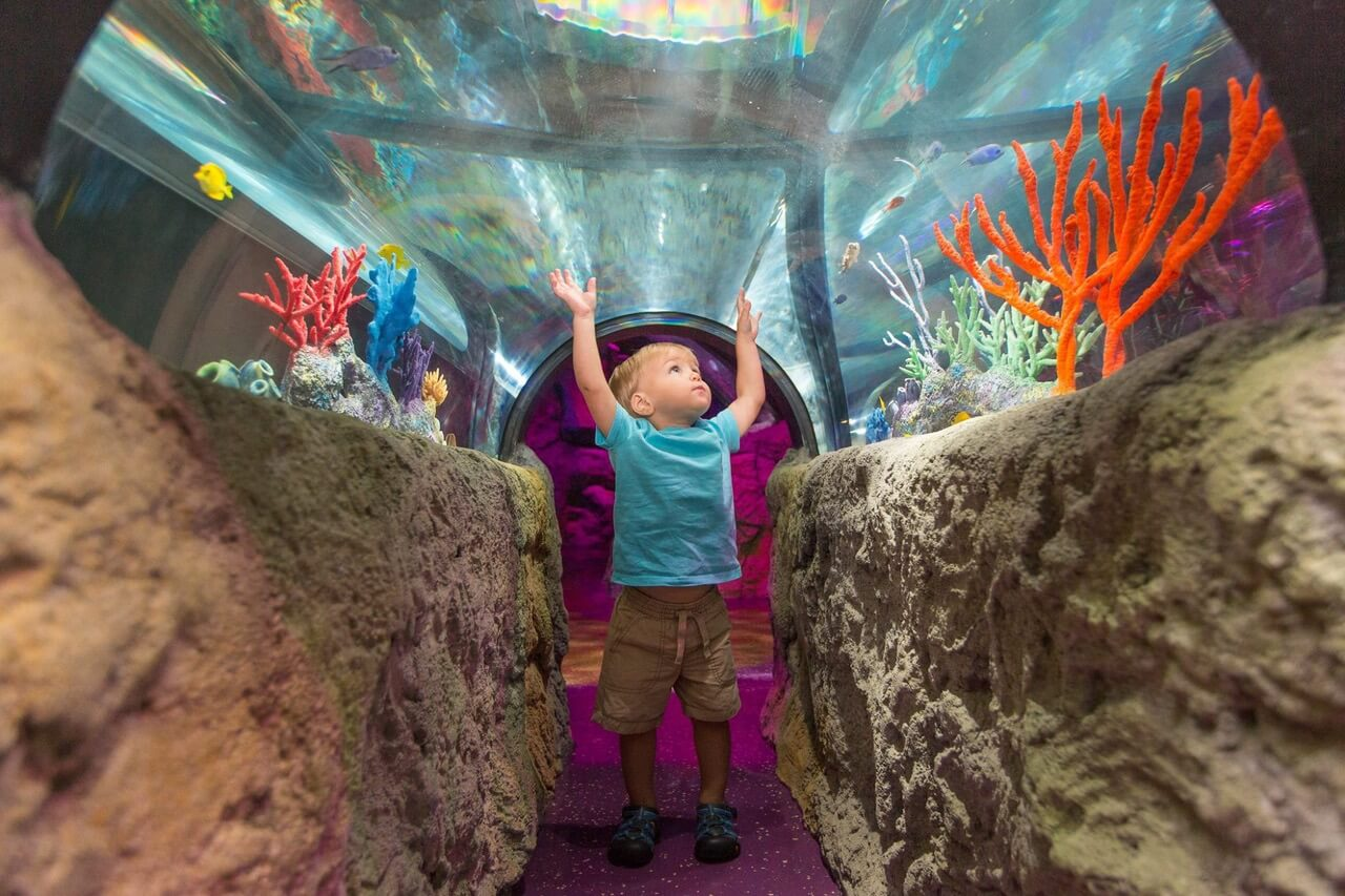 SEA LIFE + LEGOLAND Create an Indoor Play Escape at Great Lakes Crossing