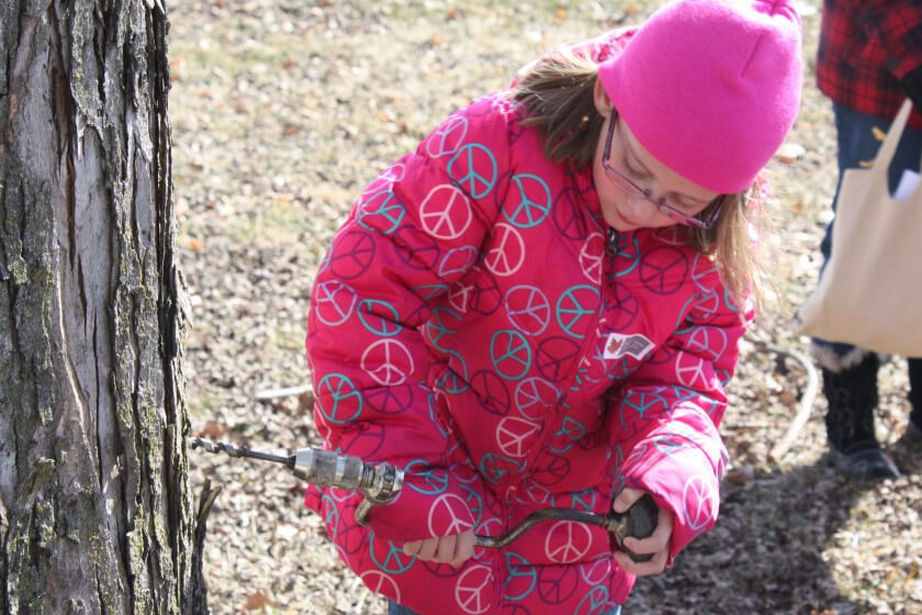 Junior Naturalist Club: Maple's Sweet Story