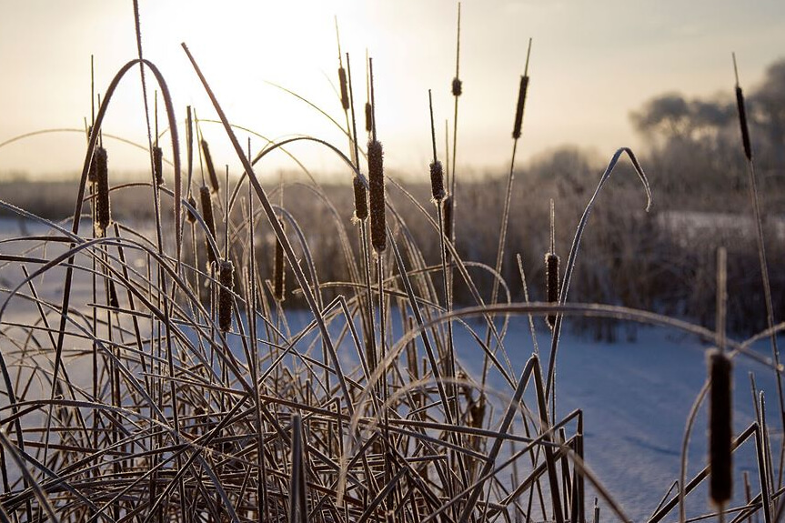 Young Explorers: Wetlands In Winter