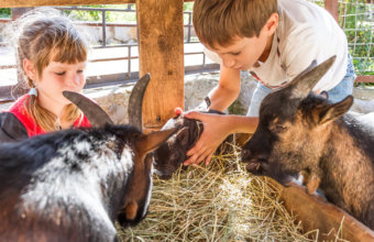 10 Amazing Summer Camps For Animal Lovers