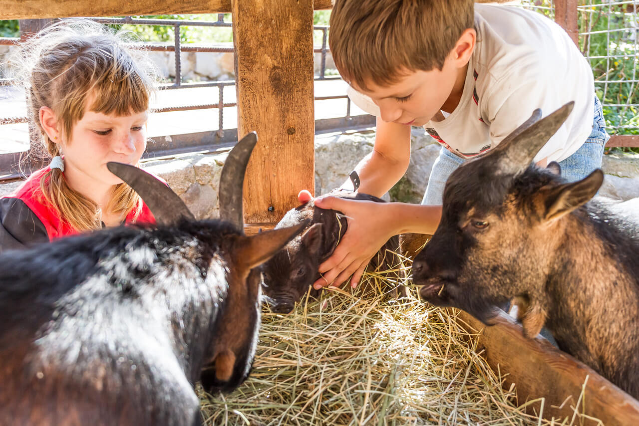 11 Amazing Summer Camps For Animal Lovers