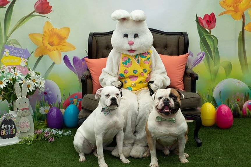 Bring Your Best Friend To Meet The Easter Bunny