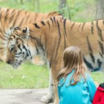10 ZOOS FOR MICHIGAN FAMILIES TO VISITS