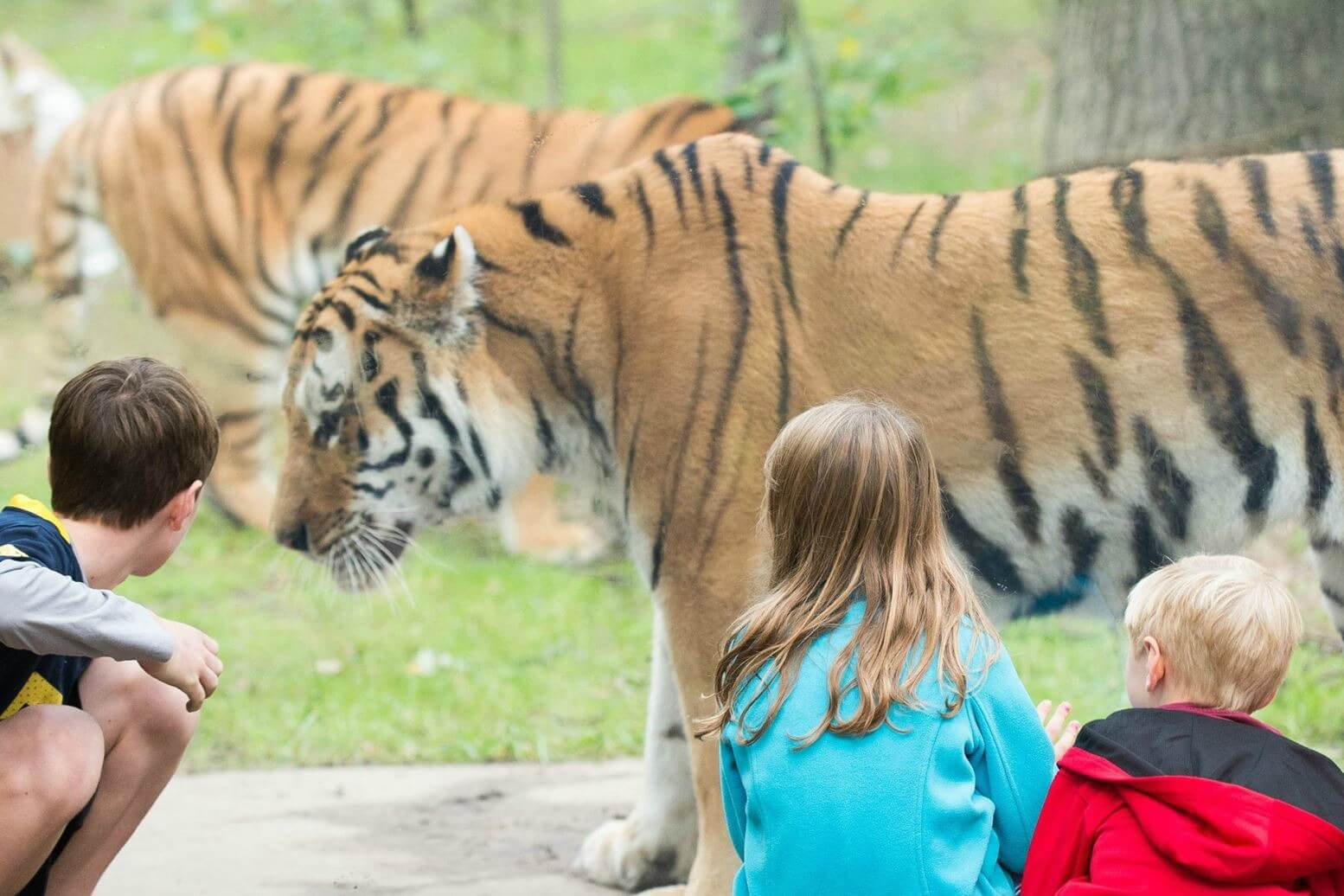 10 ZOOS FOR MICHIGAN FAMILIES TO VISIT
