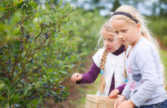 Top Blueberry Picking In Metro Detroit
