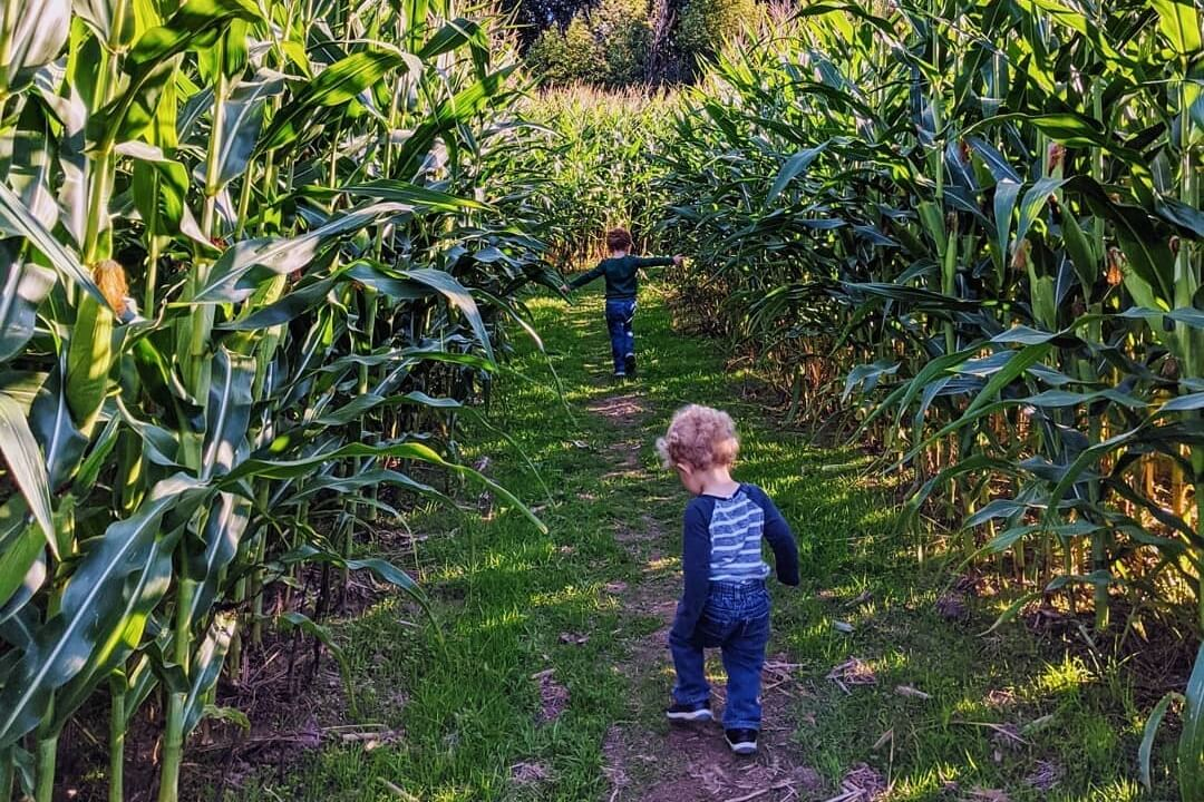 Maybury Farm Offers Corn Mazes, Scavenger Hunts, Donuts + Cider