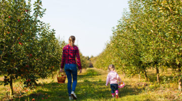 U-Pick Apple Orchards In Metro Detroit