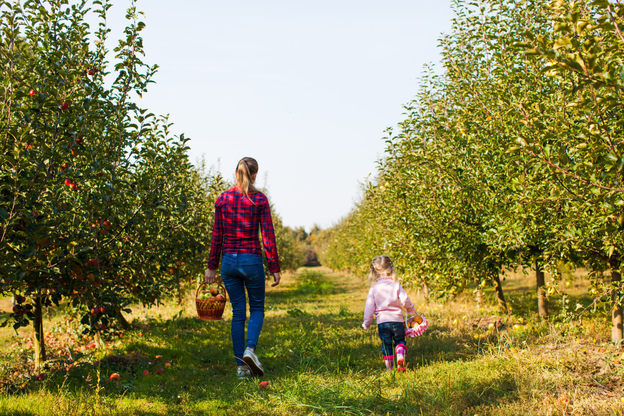 Happy Family Walking In The Apple Orchard, View From The Back