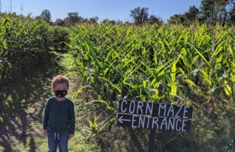 Get Lost This Fall In Maybury Farm Corn Maze