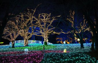 Top Light Shows Happening In Metro Detroit This Holiday Season