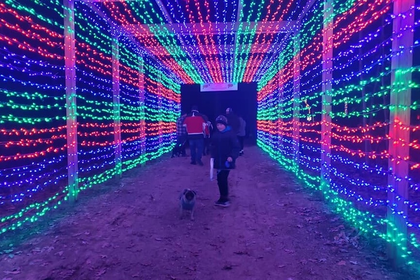 Tails N Trail Of Lights & Walking Night