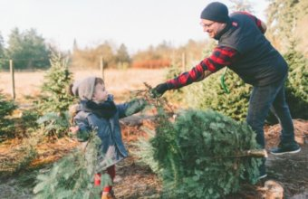 Best U-Pick Christmas Tree Farms In Metro Detroit
