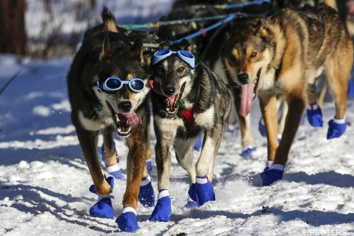 Michigan Sled Dogs