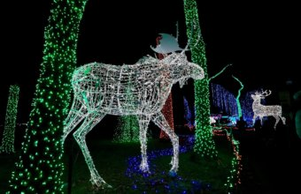 Detroit Zoo Extends Wild Lights Event Through January