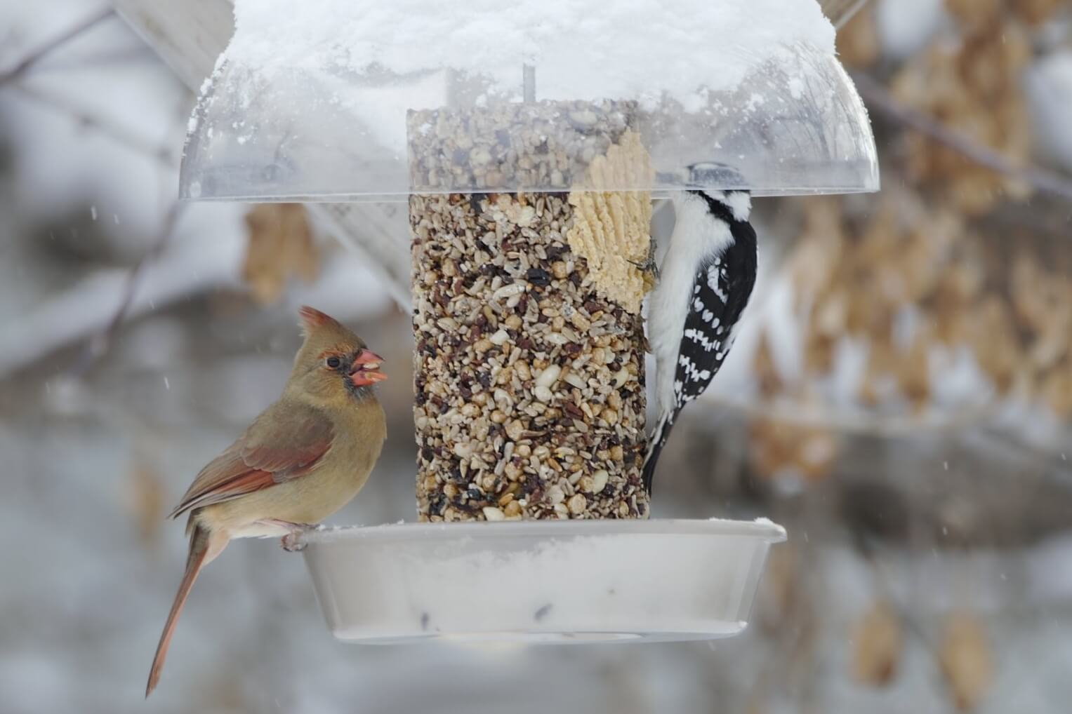 Outdoor Birdfeeder Watch