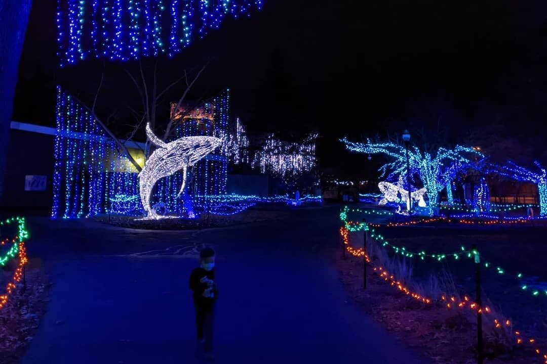 Wild Lights At The Detroit Zoo