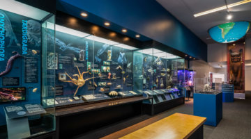 GIVEAWAY: New 'Life On Earth' Exhibit NOW OPEN At Cranbrook Institute Of Science