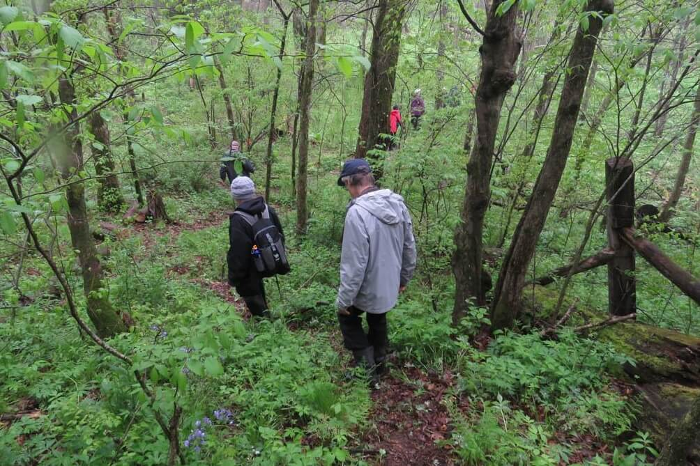 Trail Hikes At Wint