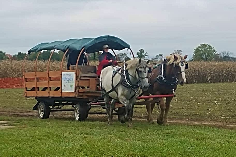 Family Horse Drawn Wagon Rides
